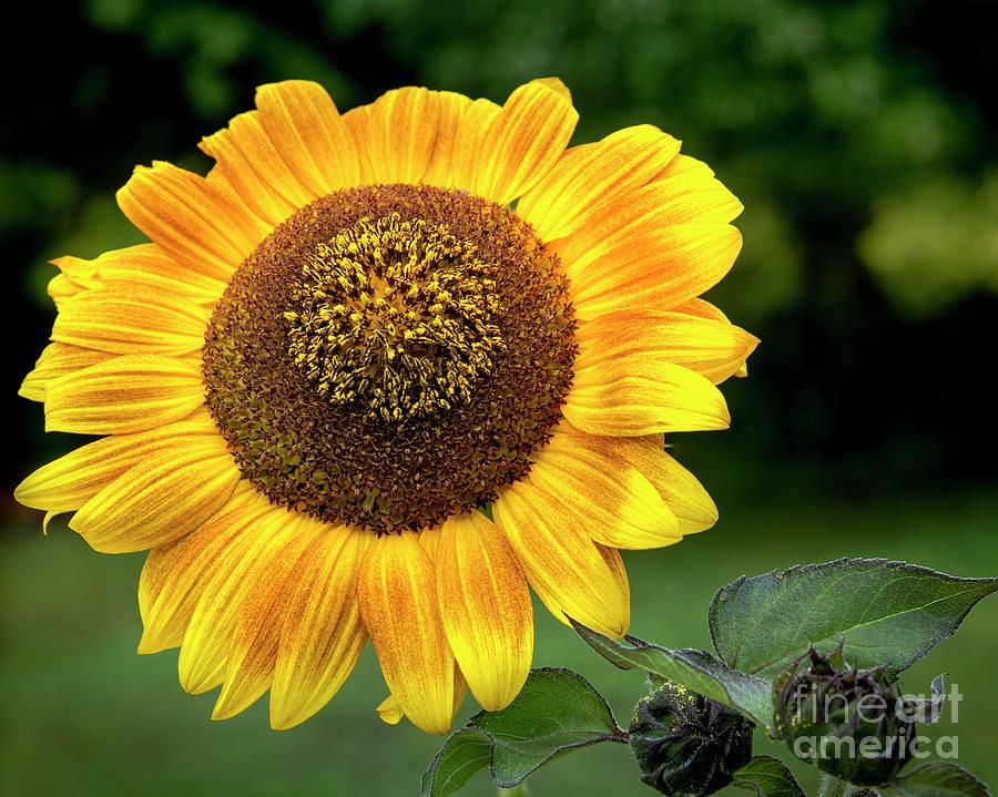 Yellow Beauty  by Alana Ranney