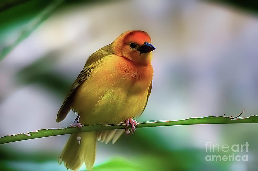Yellow Photograph - Yellow Bird by James Foshee
