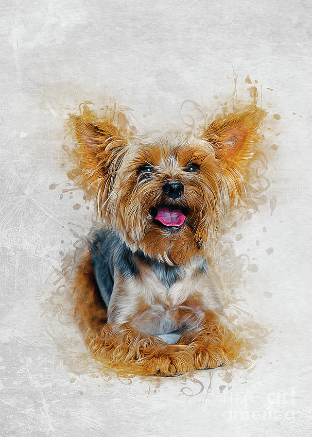 Yorkshire Terrier by Ian Mitchell