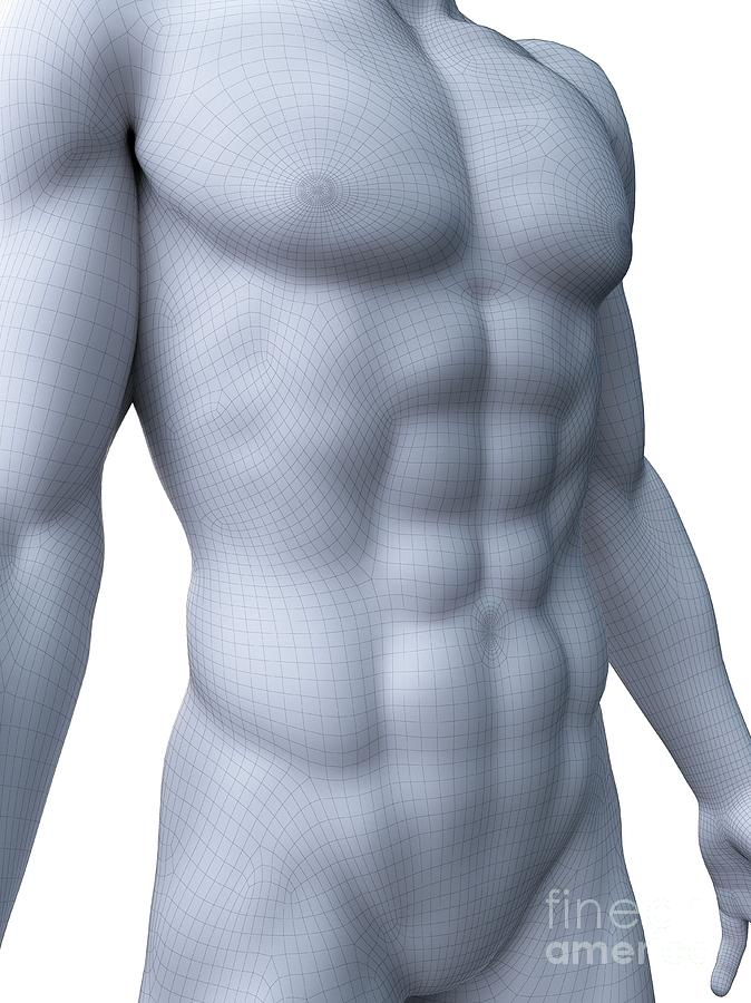 3d Photograph - Abdominal Muscles by Sebastian Kaulitzki/science Photo Library
