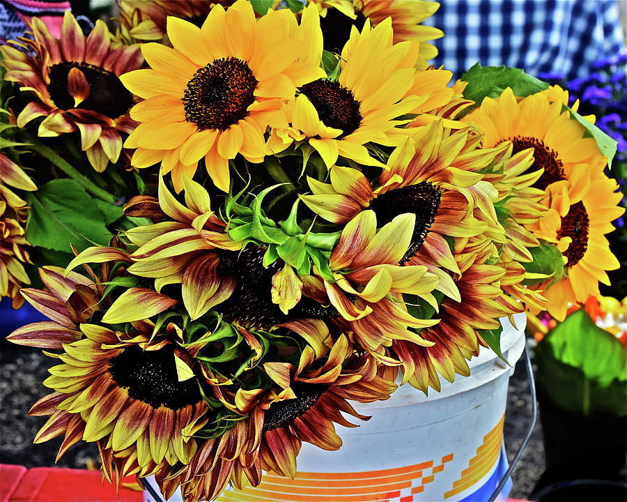 2019 Monona Farmers' Market July Sunflowers 1 by Janis Nussbaum Senungetuk