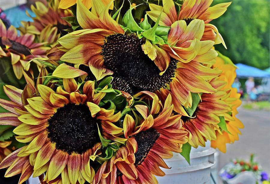 2019 Monona Farmers' Market July Sunflowers 2 by Janis Nussbaum Senungetuk