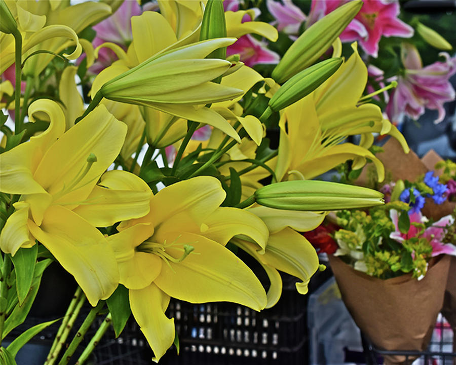 2019 Monona Farmers' Market July Yellow Lilies by Janis Nussbaum Senungetuk
