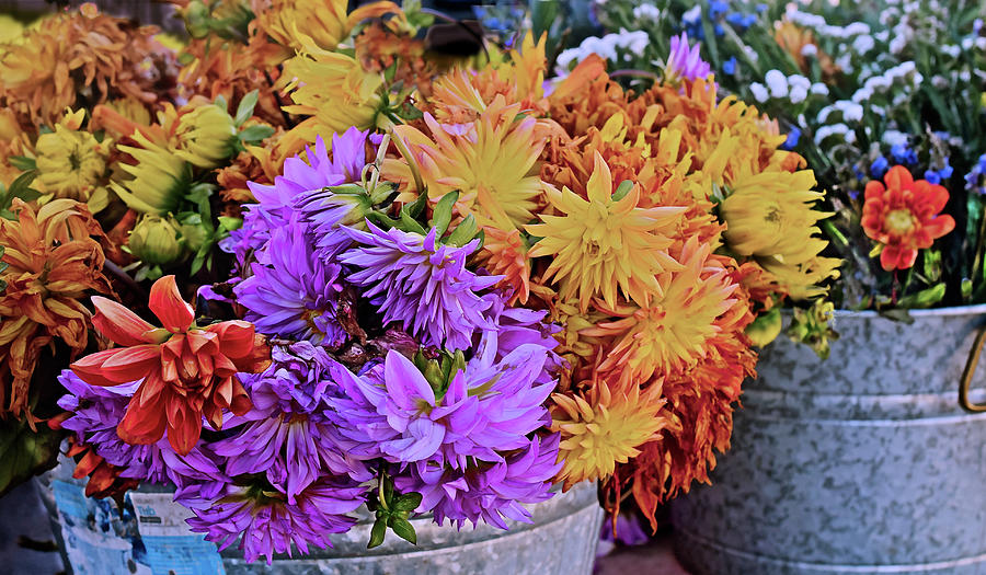 2019 Monona Farmers' Market Late October Flowers 1 by Janis Nussbaum Senungetuk