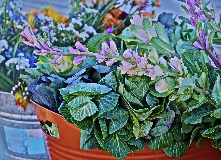2019 Monona Farmers' Market Late October Flowers 3 by Janis Nussbaum Senungetuk