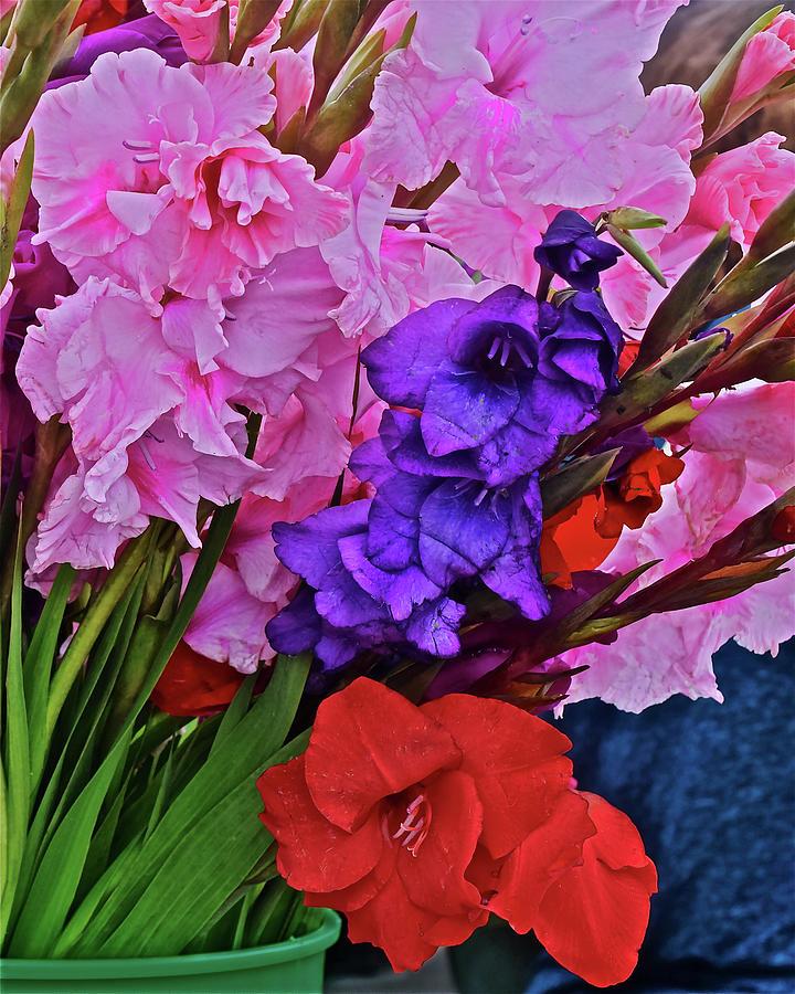 2019 Monona Farmers' Market September Gladiolus 1 by Janis Nussbaum Senungetuk