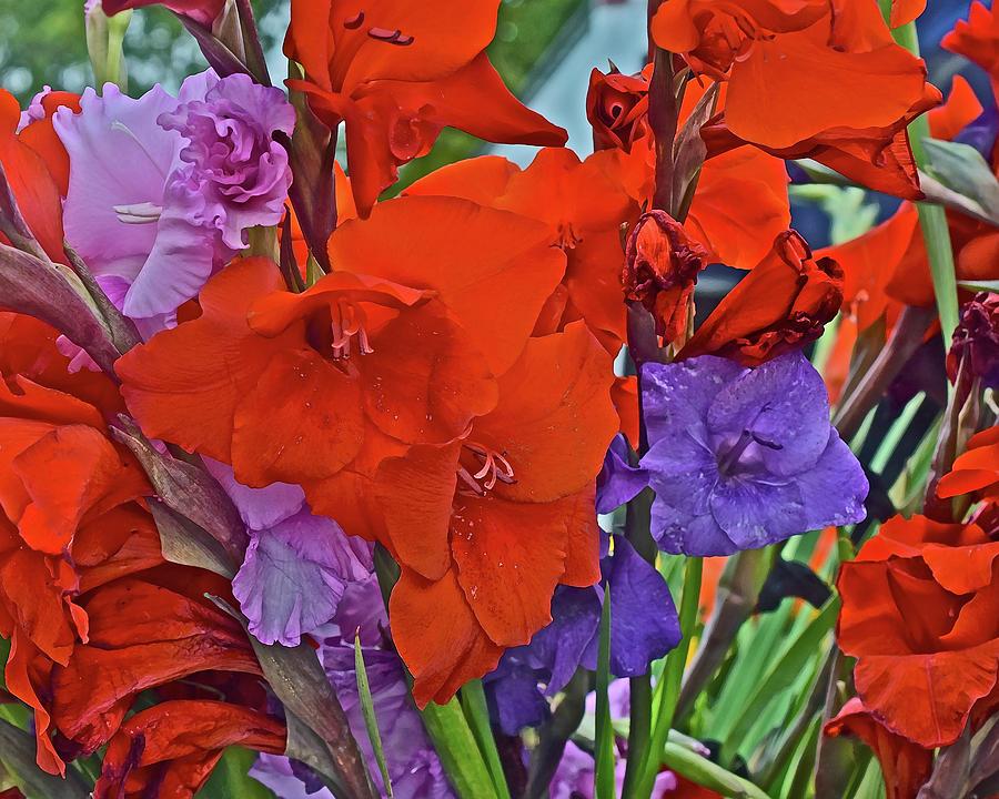 2019 Monona Farmers' Market September Gladiolus 2 by Janis Nussbaum Senungetuk