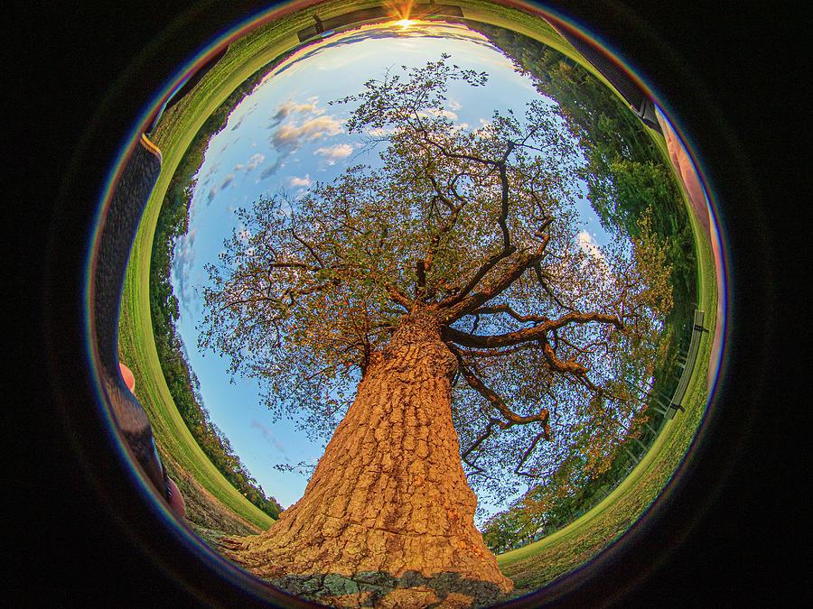 210 degree Mount Laurel Tree by Louis Dallara