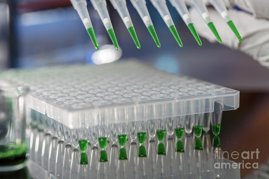 Indoors Photograph - Multichannel Pipette 22 by Wladimir Bulgar/science Photo Library