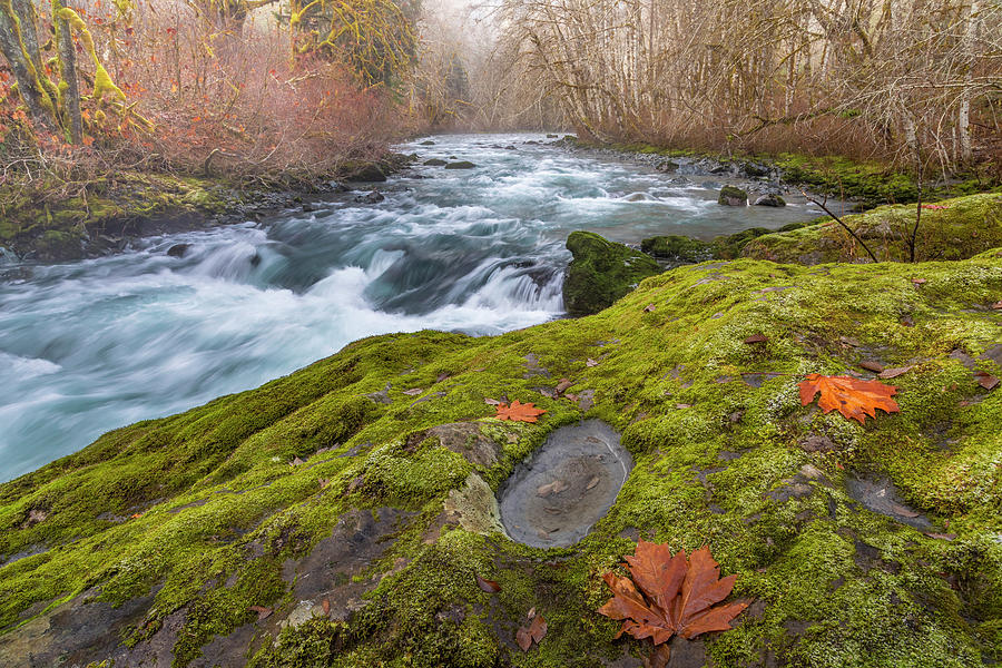 Alder Photograph - Usa, Washington State, Seabeck by Jaynes Gallery