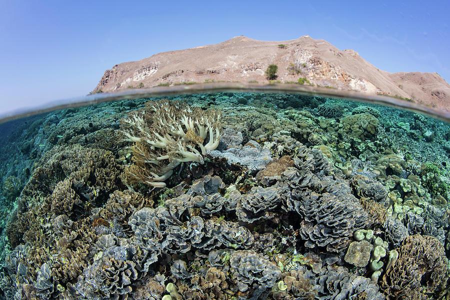 A Healthy Coral Reef Thrives In Komodo by Ethan Daniels