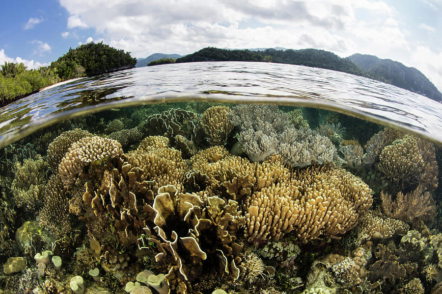 Indonesia Photograph - A Beautiful Coral Reef Thrives Among by Ethan Daniels