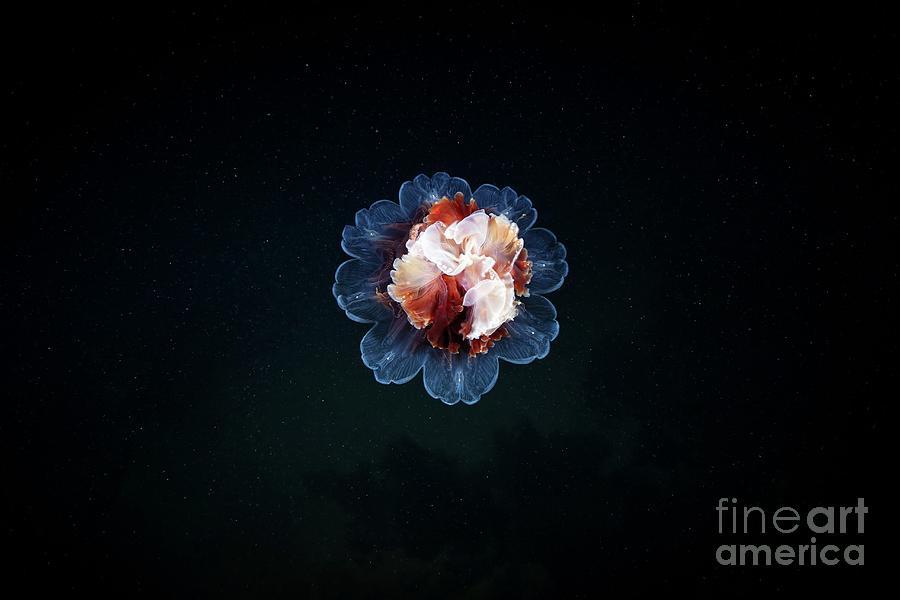 Cyanea Capillata Photograph - Lions Mane Jellyfish by Alexander Semenov/science Photo Library