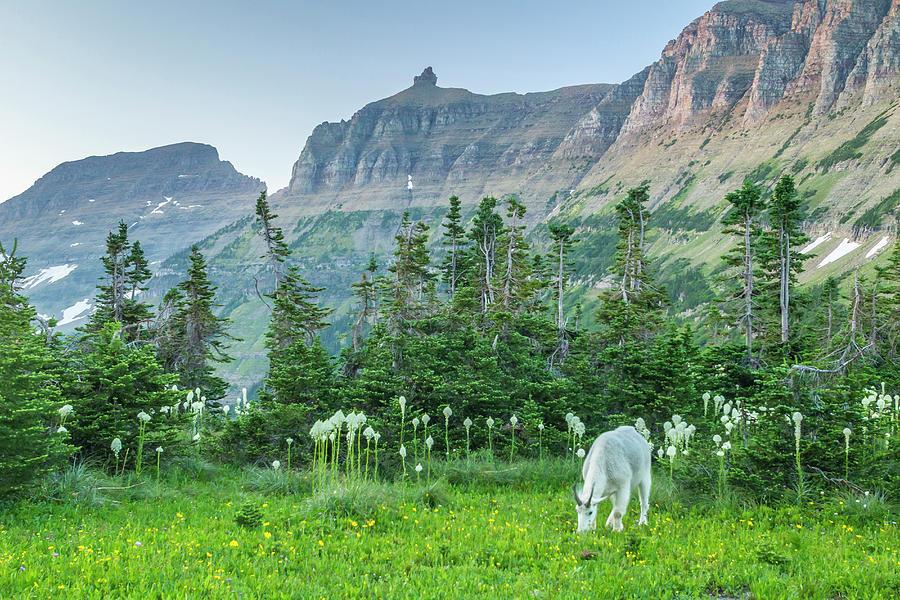 Close-up Photograph - Usa, Montana, Glacier National Park by Jaynes Gallery