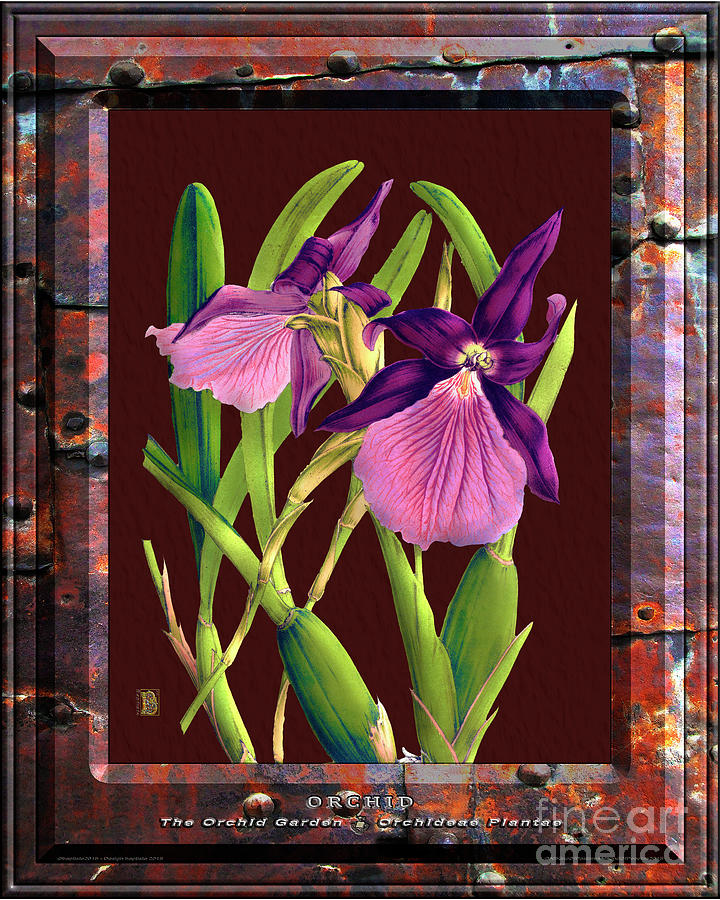 Classic Vintage Orchid And Hyper-realism Painting Of Rusted Metal Mixed Media