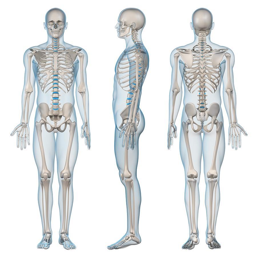 Male Skeleton, Artwork Digital Art by Sciepro