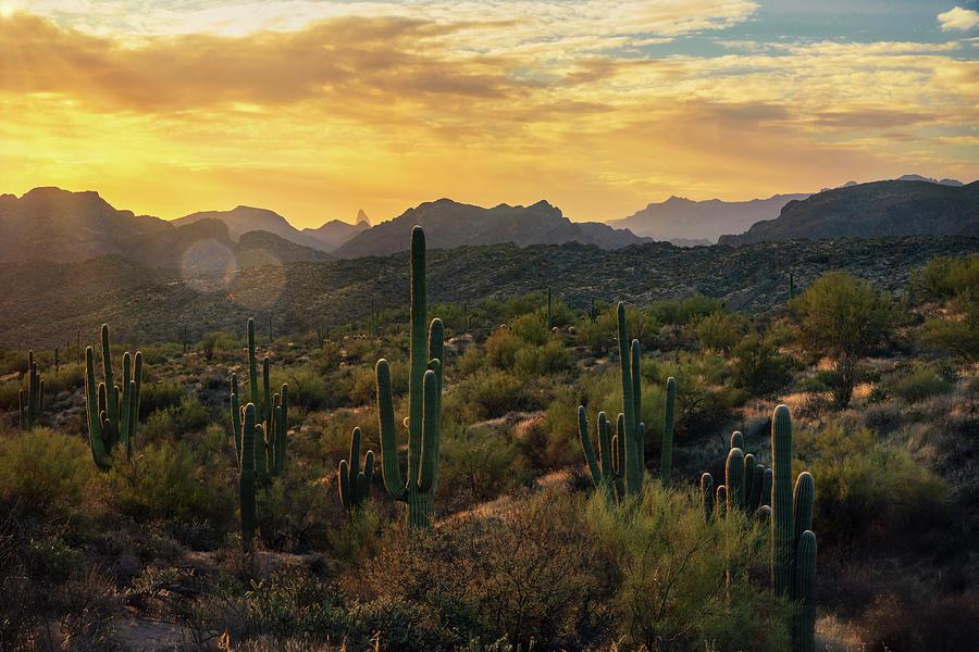 A Golden Saguaro Sunrise  by Saija Lehtonen