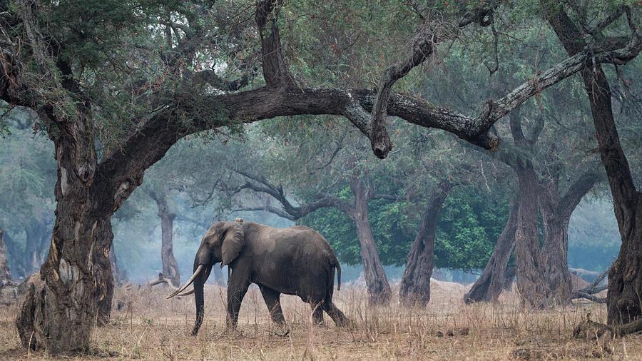 Death Photograph - Africa, Zimbabwe, Matusadona National by Jaynes Gallery