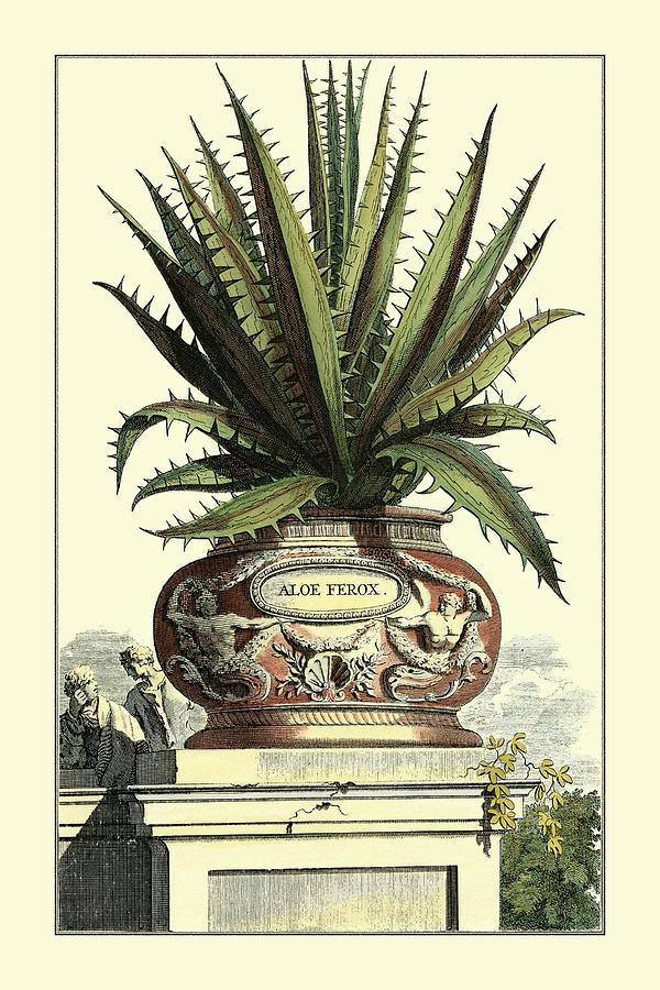 Botanical Painting - Antique Munting Aloe I by Abraham Munting