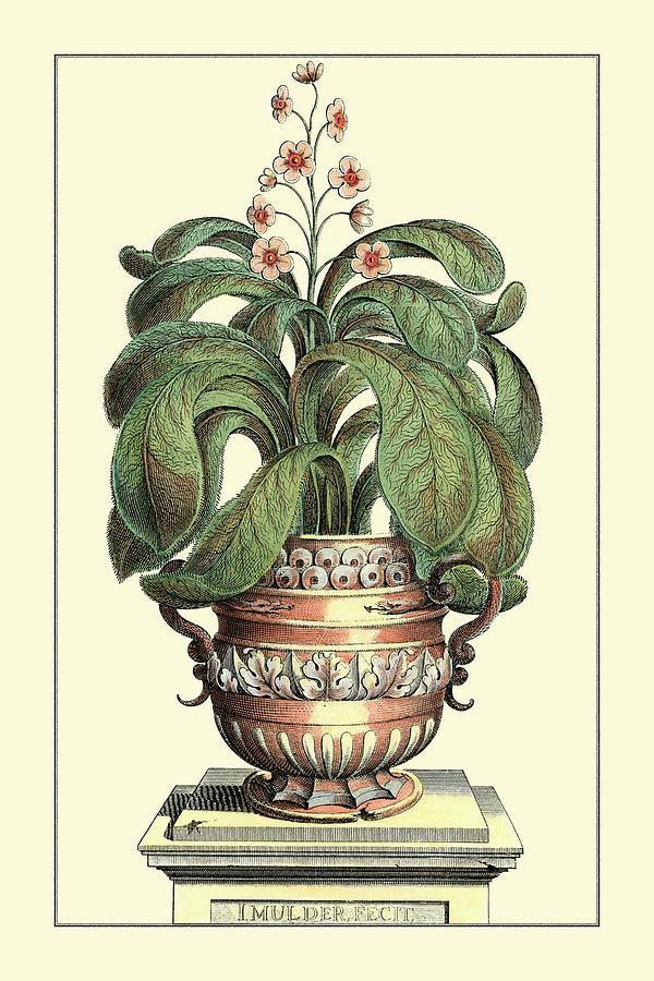 Botanical Painting - Antique Munting Aloe II by Abraham Munting
