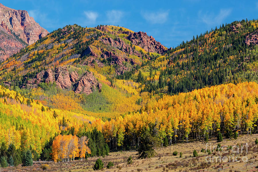 Autumn Leaves On Pikes Peak Photograph