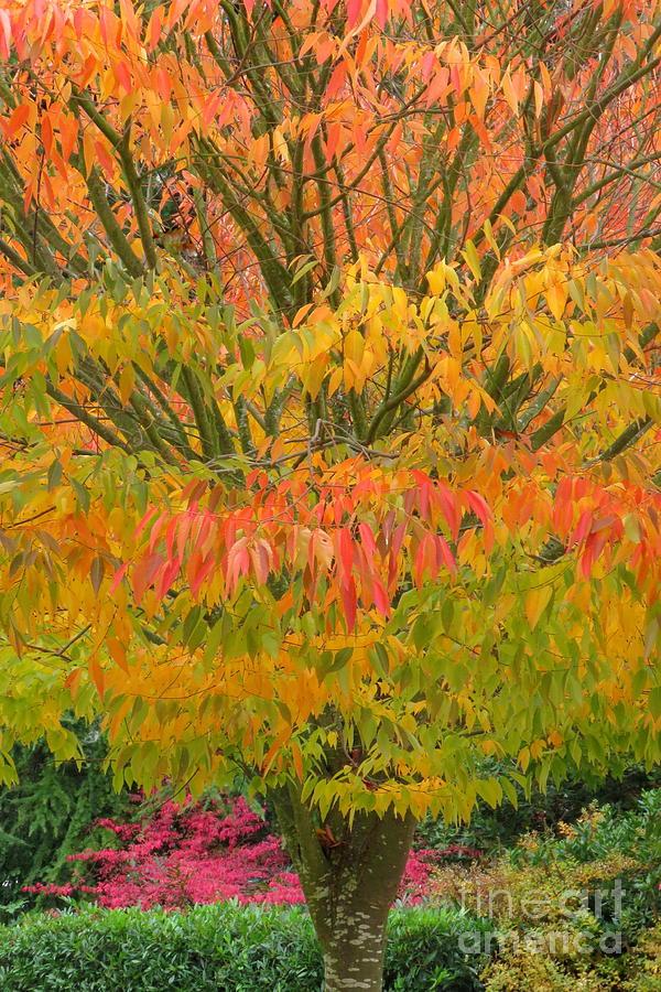 Autumn rainbow by Frank Townsley