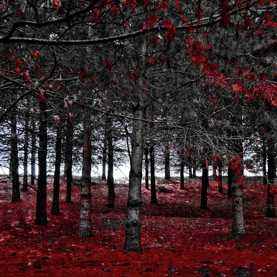 Autumn Reds by David Patterson