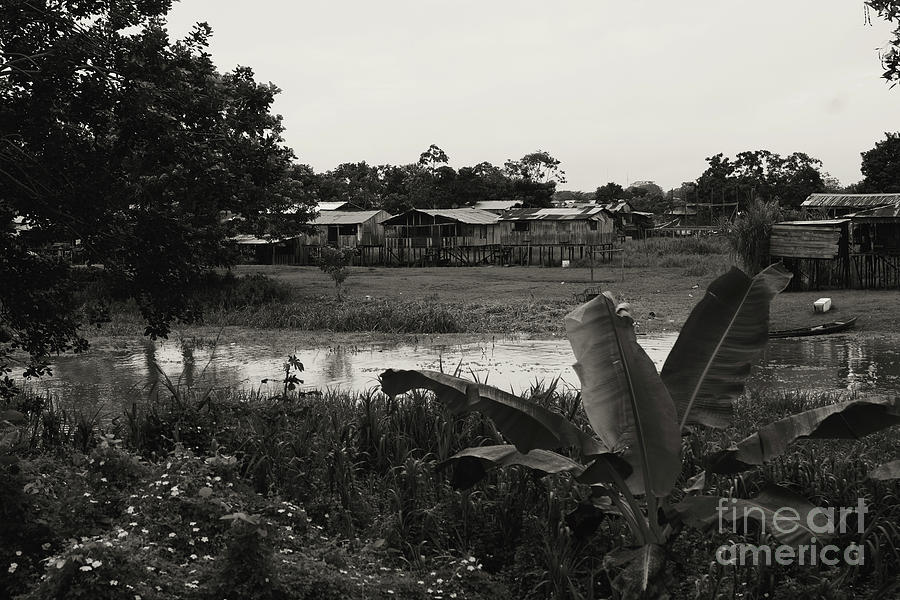 Banks Of The Amazon Photograph