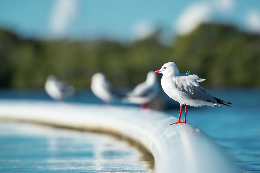Beautiful Seagull by Rob D Imagery