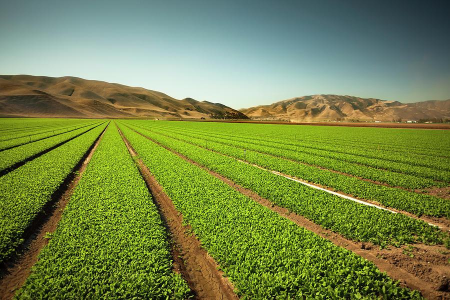 Crops Grow On Fertile Farm Land Photograph by Pgiam