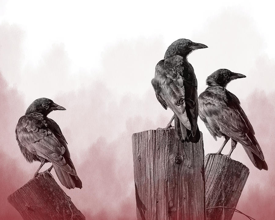 3 Crows by Mary Hone