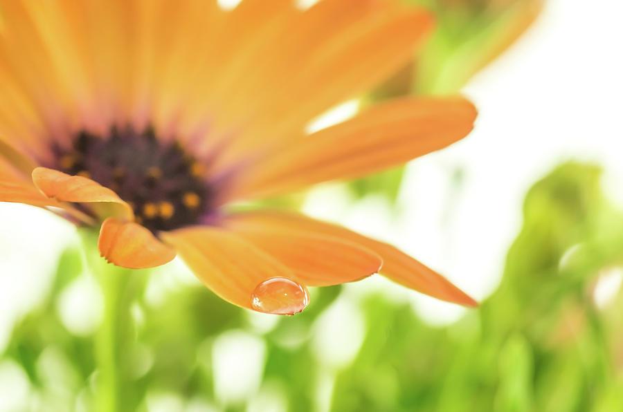 Daisy by Ken Mickel