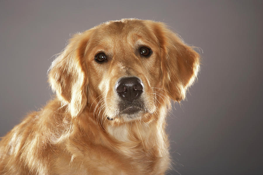 Dog Photograph by Chris Amaral