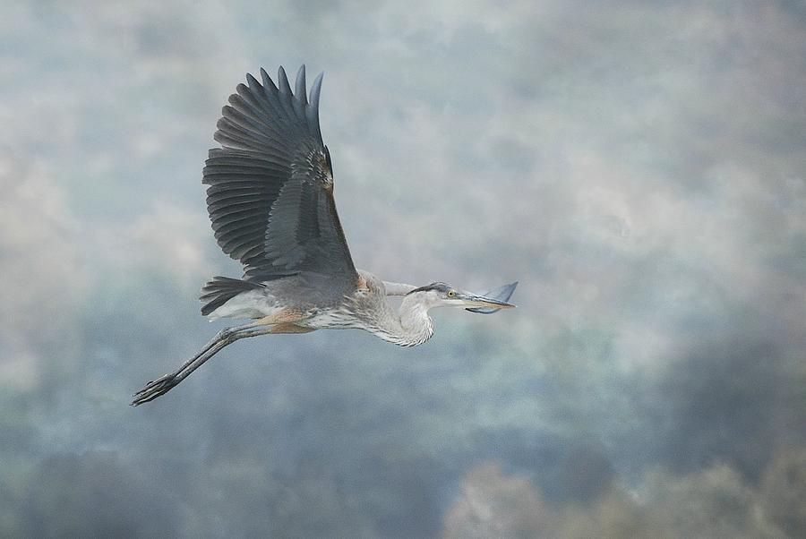 Flight Of Fancy by Fraida Gutovich