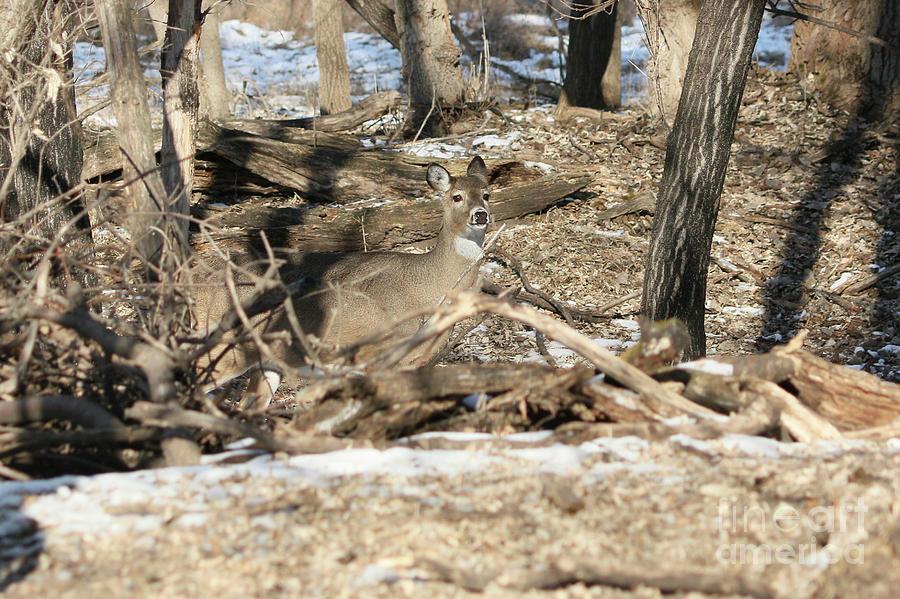 Deer Photograph - Hidden In The Trees by Lori Tordsen