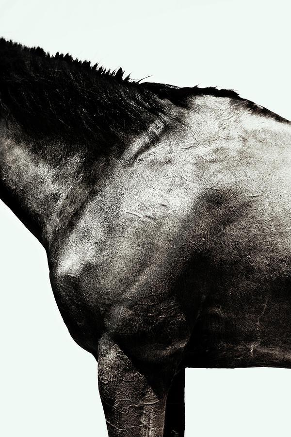 Horse Photograph by Yusuke Murata