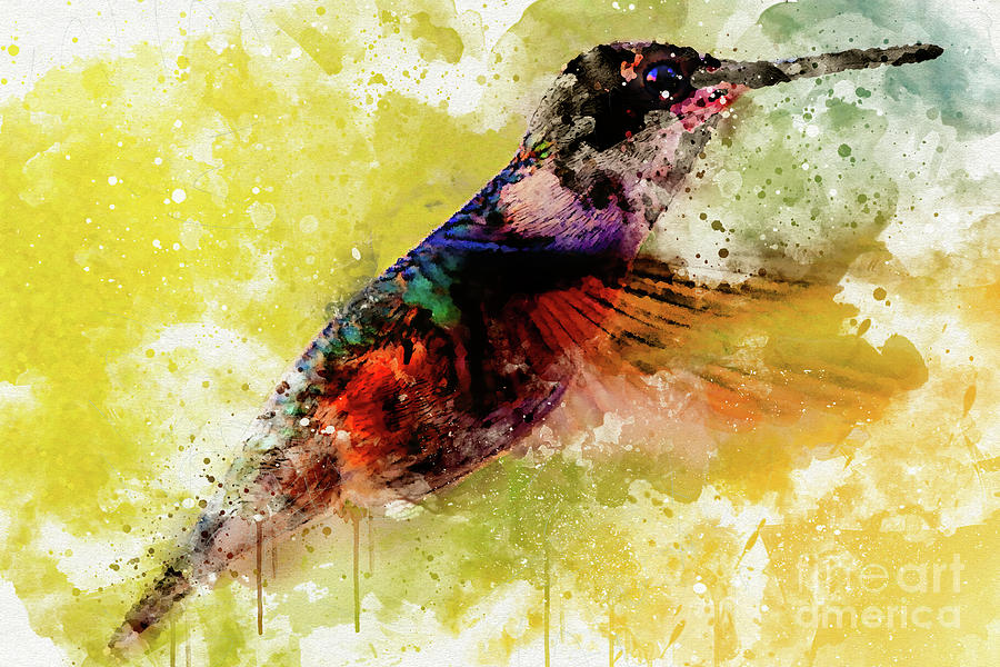 Hummingbird by Mark Jackson