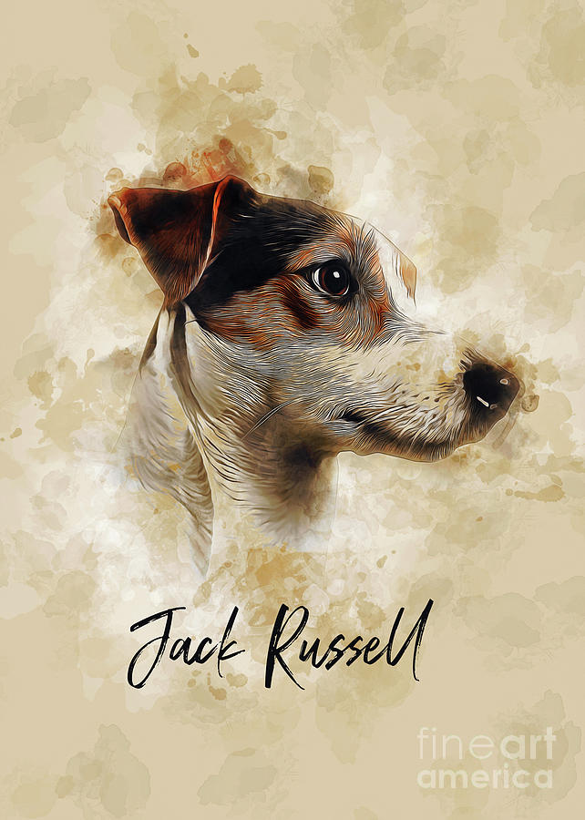Jack Russell by Ian Mitchell