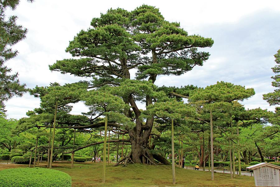Kenrokuen Garden - Kanazawa, Japan by Richard Krebs