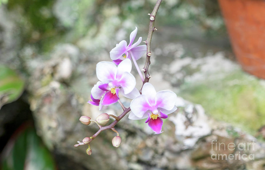 Orchids by Cathy Donohoue