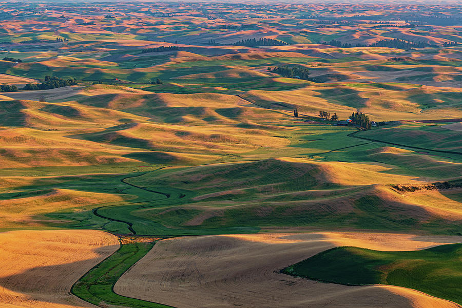 Palouse Hills of Wheat Land by Michael Lee
