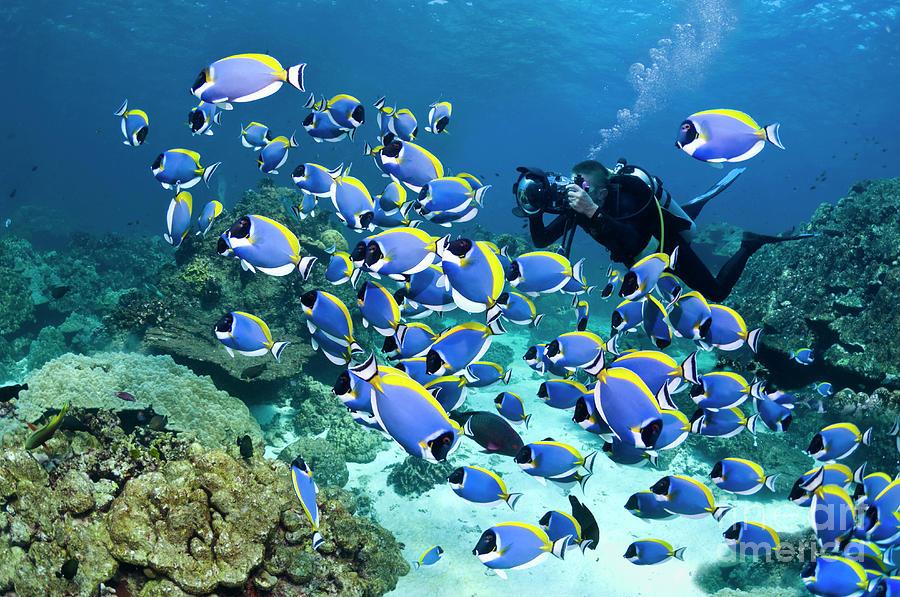 Powderblue Surgeonfish Photograph by Georgette Douwma
