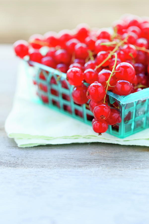Red Currants Photograph by Nicolesy
