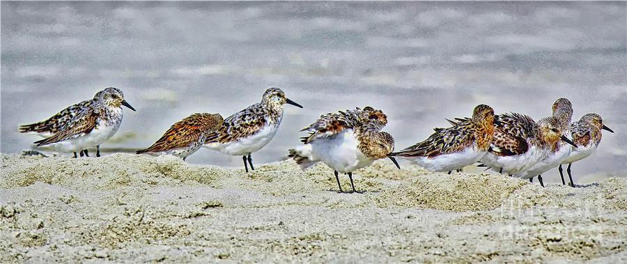 Shore Birds by Paulette Thomas