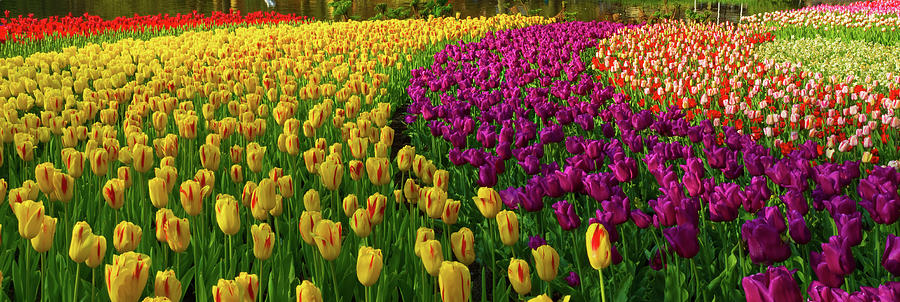 Spring Flowers In A Park Photograph by Jacobh