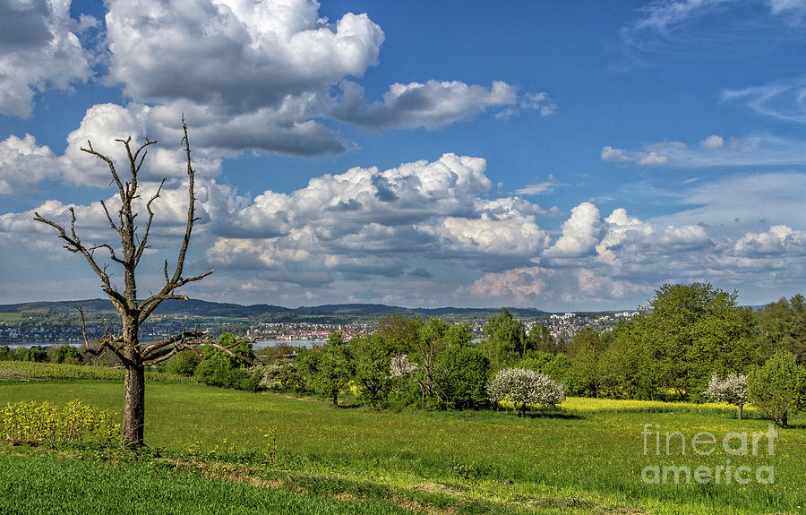 Spring on Lake Constance by Bernd Laeschke