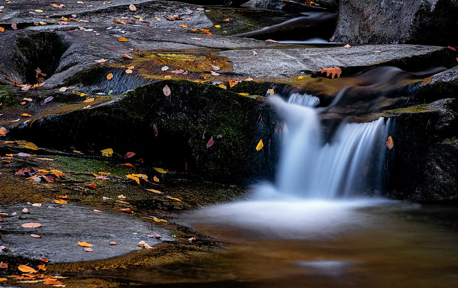 Stickney Brook by Tom Singleton