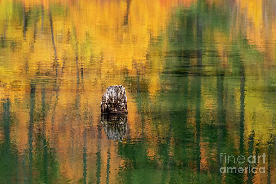 Surrounded by Autumn by Mike Dawson