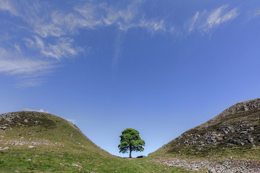 Sycamore Gap - England by Joana Kruse