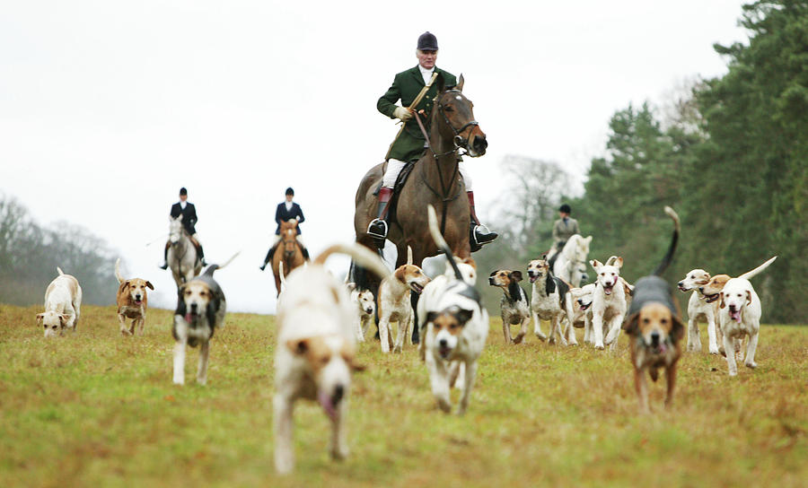 The Beaufort Hunt, Gloucestershire Photograph by Brent Stirton